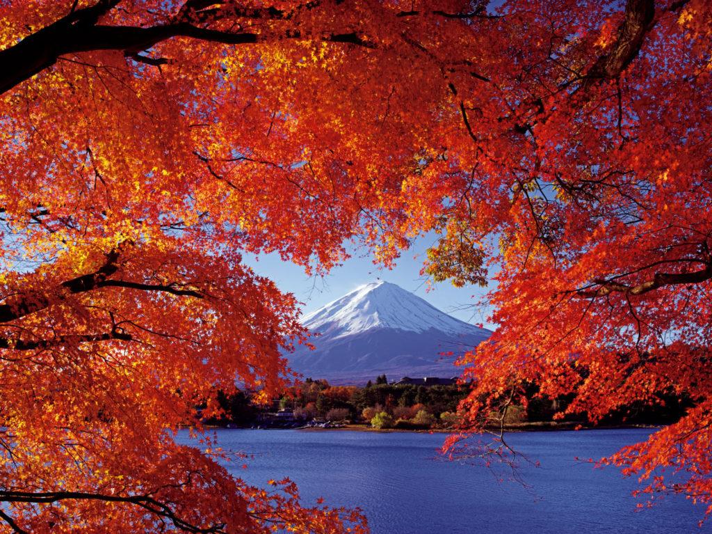 富士山ともみじトンネル