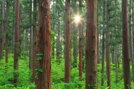 """日本の林業、森を守る""""間伐材""""マークの愛称募集"""
