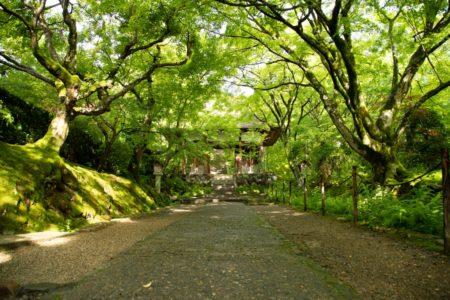 期間限定! 新元号慶祝御朱印を拝受できる「青もみじ御朱印めぐり」京都ツアー